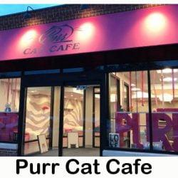 Purr Cat Cafe