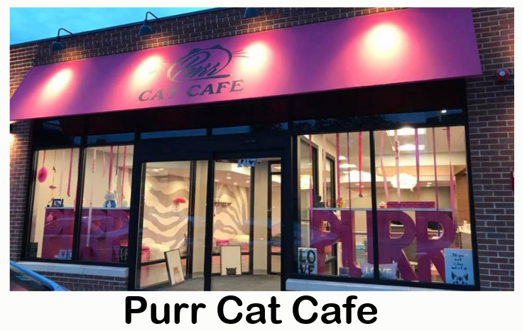 Purr Cat Cafe