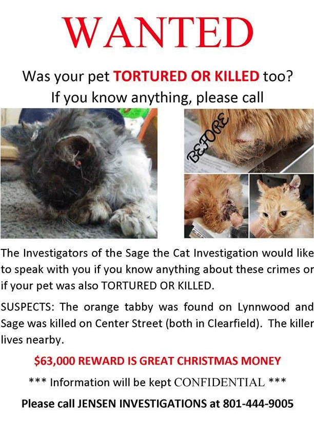 Poster on Sage the cat investigation