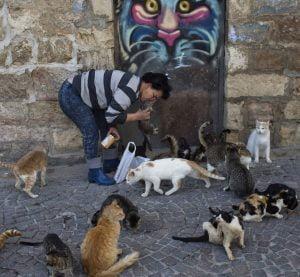 Feral cats Israel
