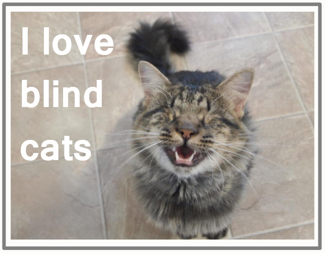 I love blind cats