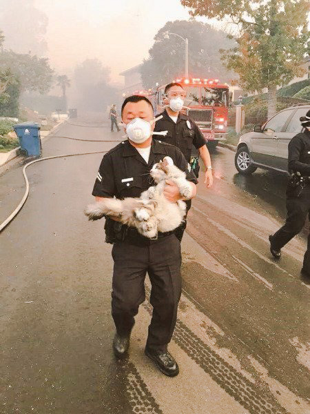 LAPD rescues a long haired singed cat from Los Angeles wildfires