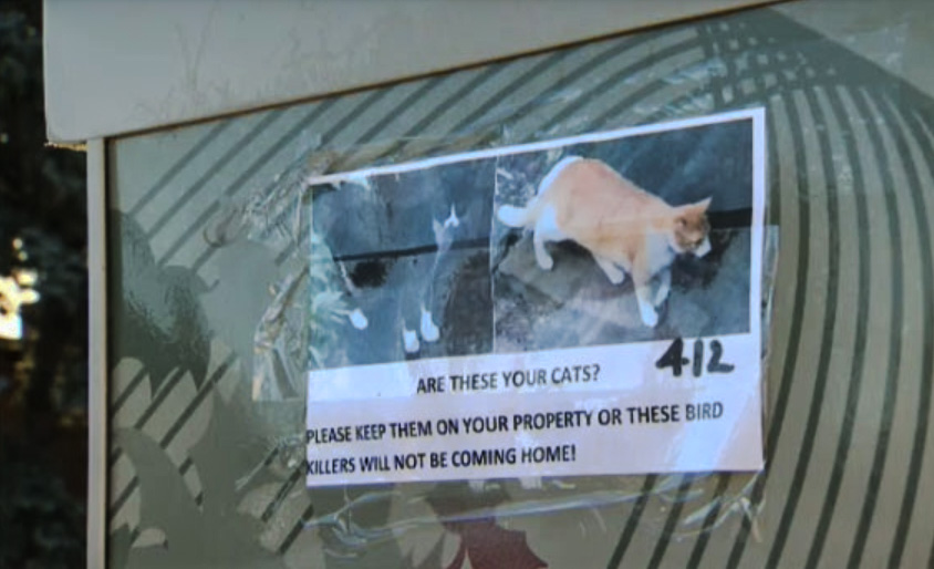 Threat to kill a cat in a poster