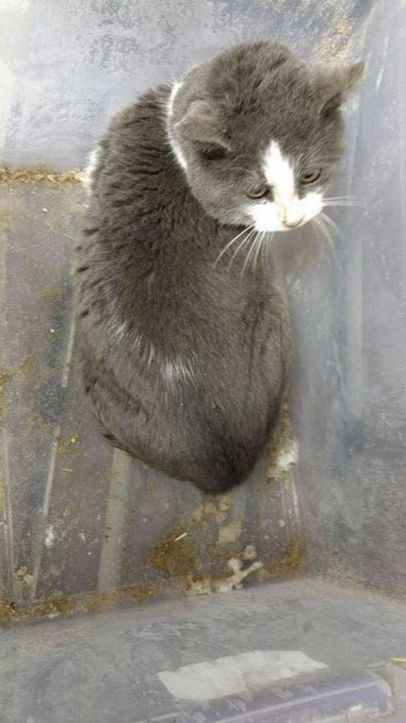 This is a picture of the cat inside the box as it arrived at the shelter in freezing conditions.