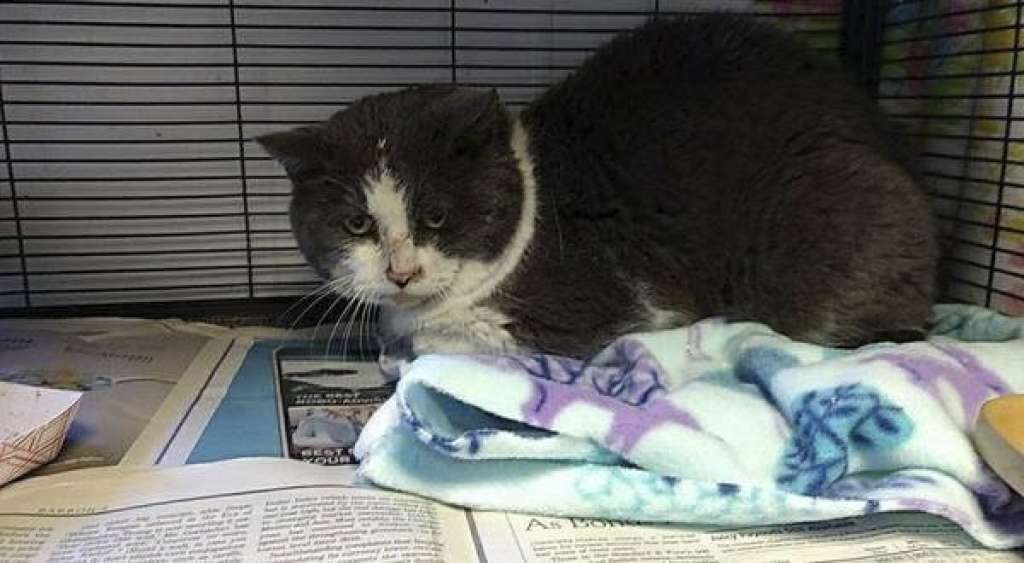 Cat abandon at a shelter in freezing conditions