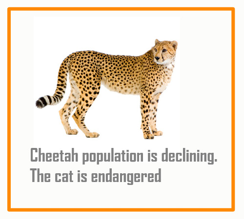 Cheetah population 2017