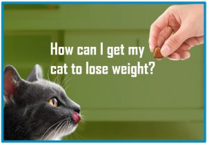 How can I get my cat to lose weight?
