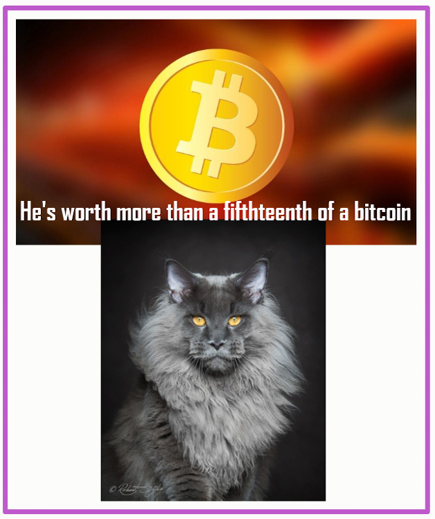 How much is a Maine Coon worth in bitcoins?