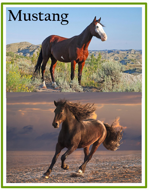 Mustangs of America's West