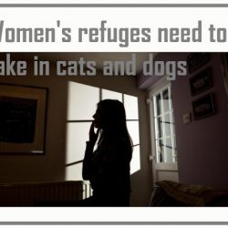 Women's refuges need to take in cats and dogs