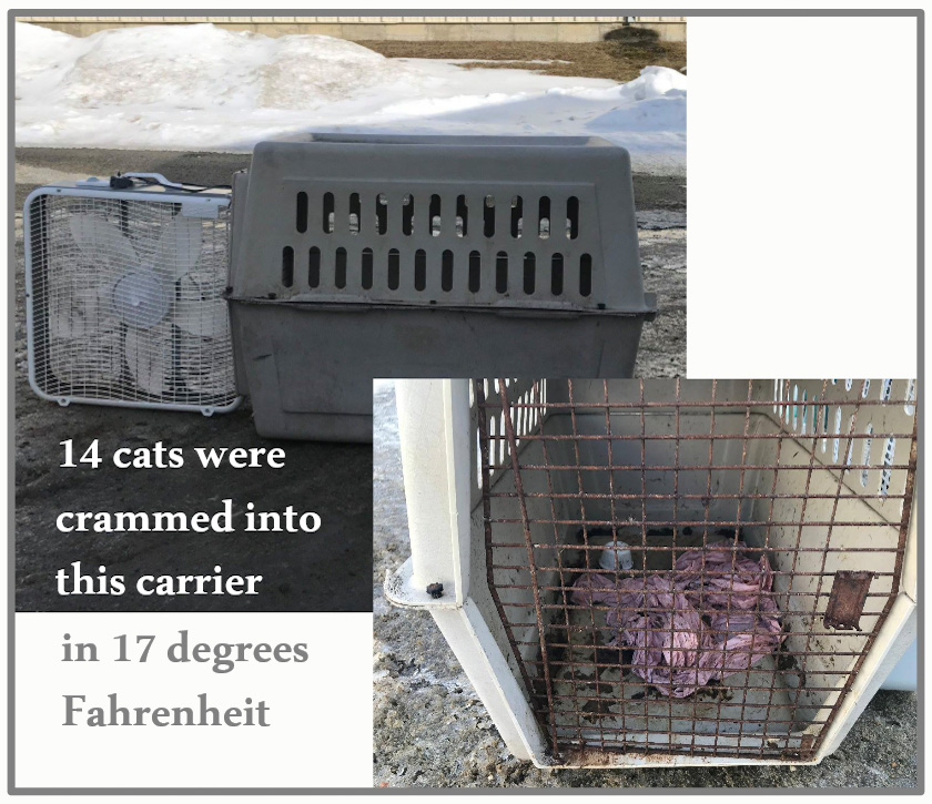 14 cats crammed into dog carrier in 17 degrees fahrenheit