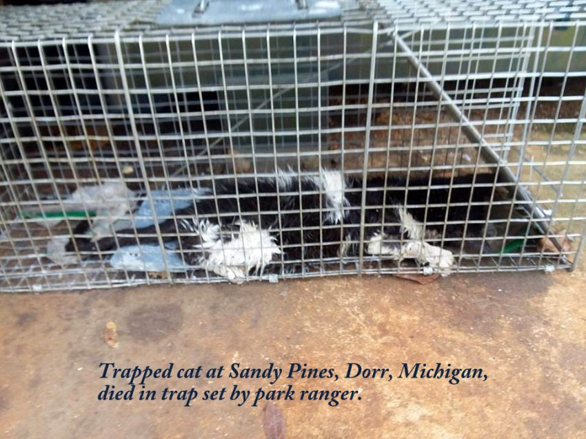 Park Ranger Allows Trapped Cat to Die in Trap