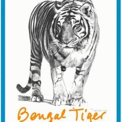 Bengal tiger is endangered