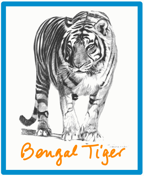 Bengal tiger is endangered
