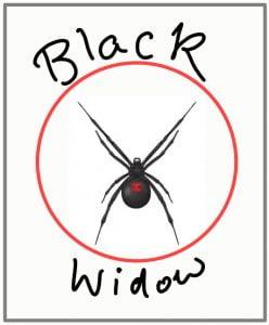 Black widow spiders can kill cats