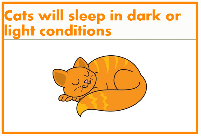 Domestic cats will sleep in dark or light conditions