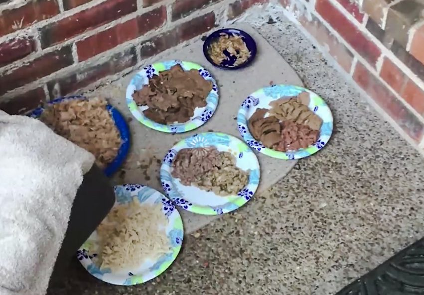 Food for feral cats