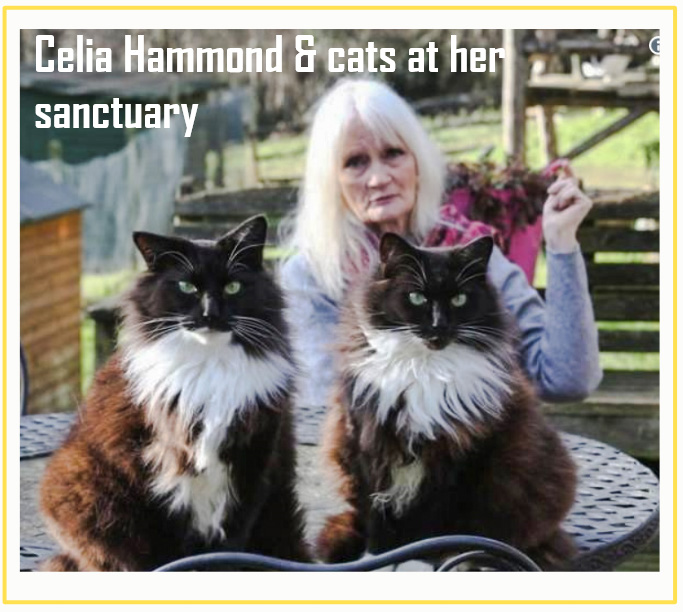 Hounds charge into Celia Hammonds cat sanctuary