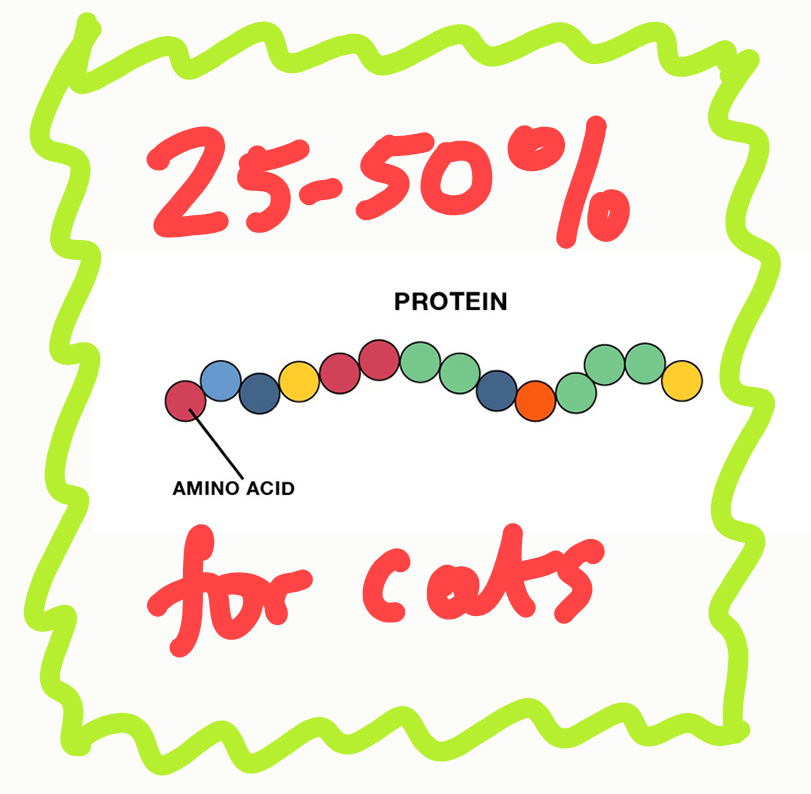 What Percentage of Protein Should Be In Cat Food?
