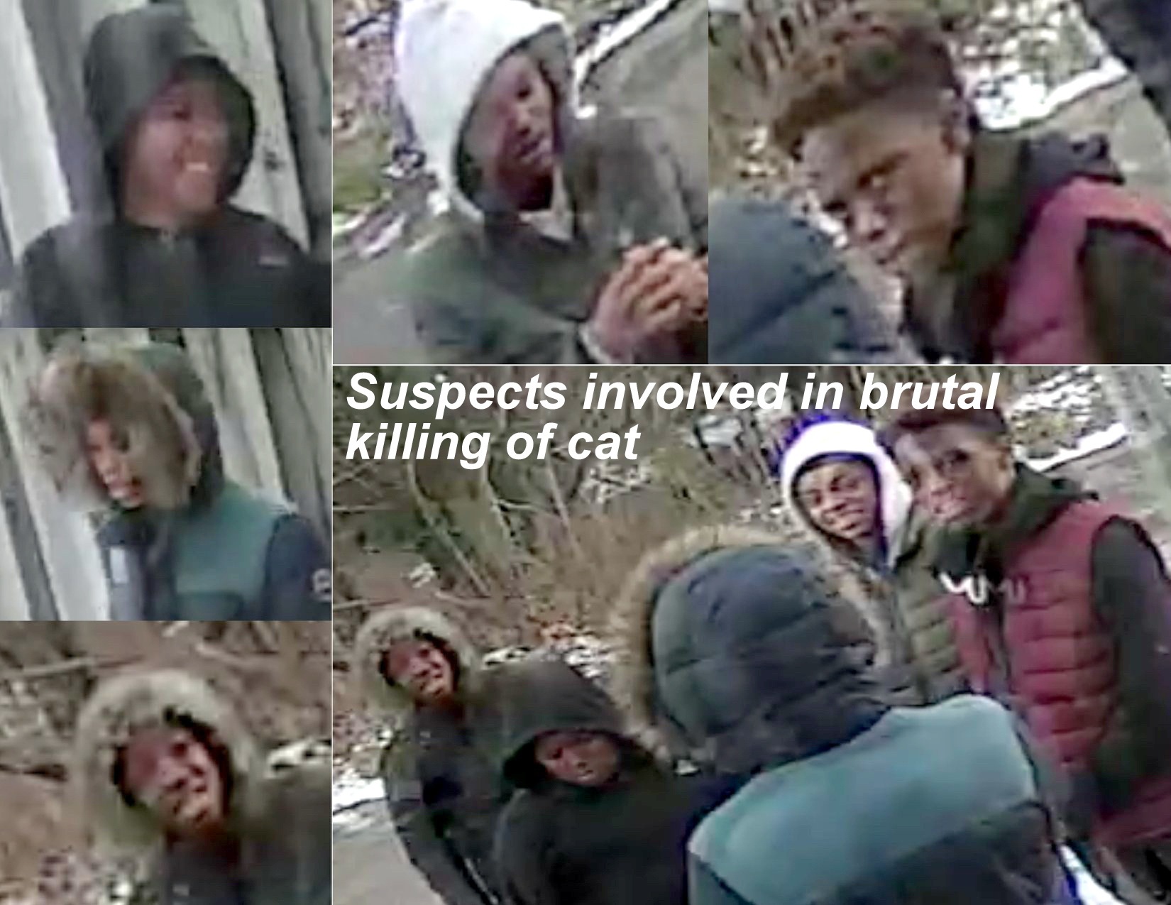 Photos of suspects who are believed to have abused an killed a cat