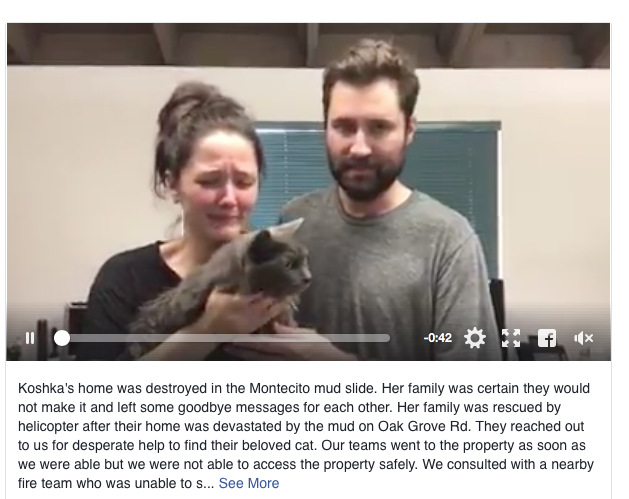 Tearful reunion between rescue cat and owner