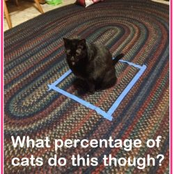 Cat in square. What percentage of cats do it?