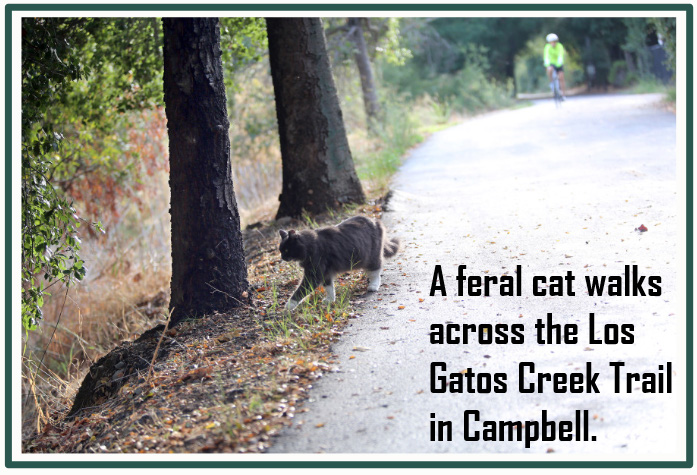 Feral cat colony Los Gatos