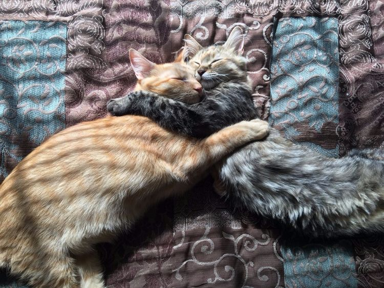 Luna and Louie two rescue cats in love