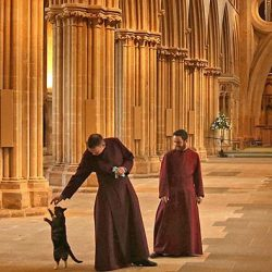 Empty Wells Cathedral and Cat