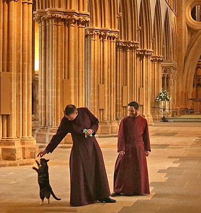 Stunning Photo Of An Empty Wells Cathedral And Cat