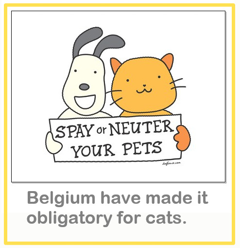 Cat spaying and neutering obligatory in Belgium from 2020.