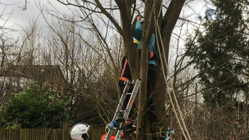 Double rescue of cat and owner from tree