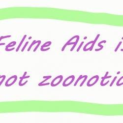 Feline Aids is not zoonotic