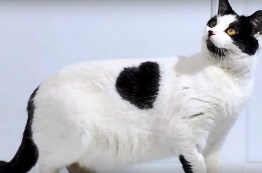Hearts and Moustaches on cats