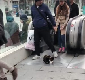 Istanbul metro cat snoozes in most unlikely position