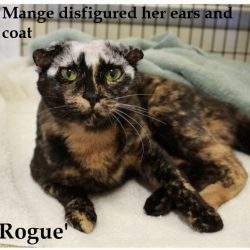 Mange Disfigured This Cat