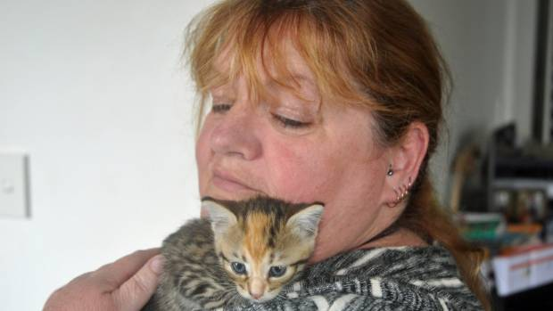 Cat Shelter Owner Frustrated with Cat Owners