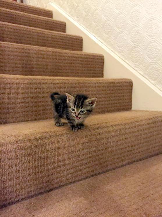 Kitten On Stairs (Photo)