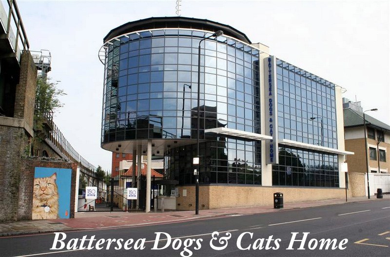 Battersea Dogs & Cats Home is running out of cats!