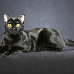 Film inspires people to adopt black cats