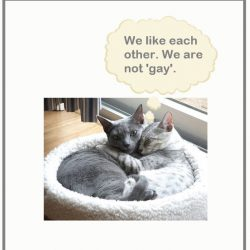 Can Cats Be Gay?