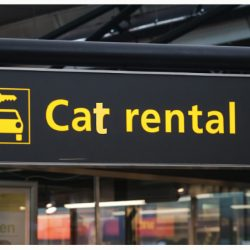 Cat rental in China