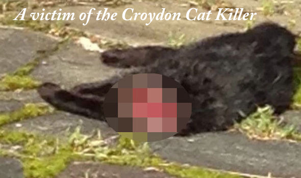 Fifteen Scotland Yard Police Officers Work on Croydon Cat Killer File