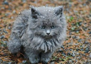 Do cats feel the cold?