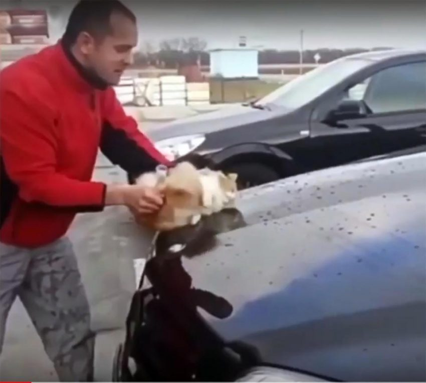 Man uses cat as a car cleaning sponge2