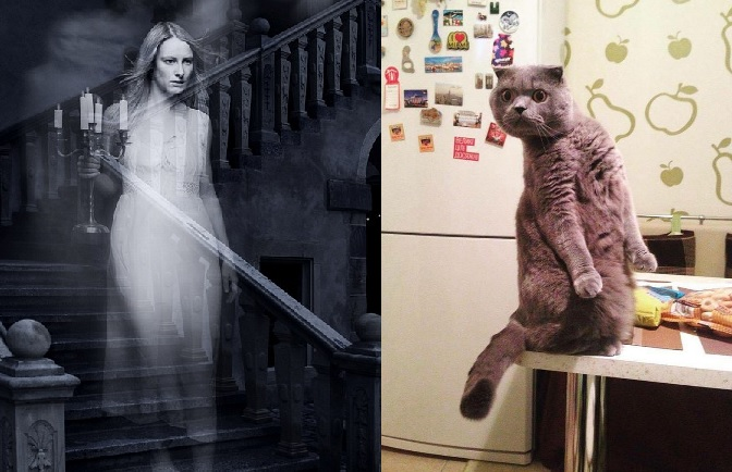 Is It True That Cats Can See Ghosts?