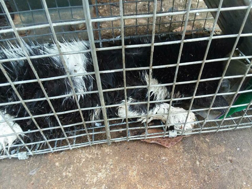 Sandy Pines management are unable to treat feral cats humanely