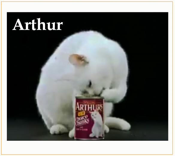 Arthur The Cat Biography