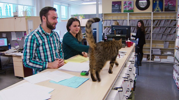 Professors and students LOVE Carlton the university campus cat