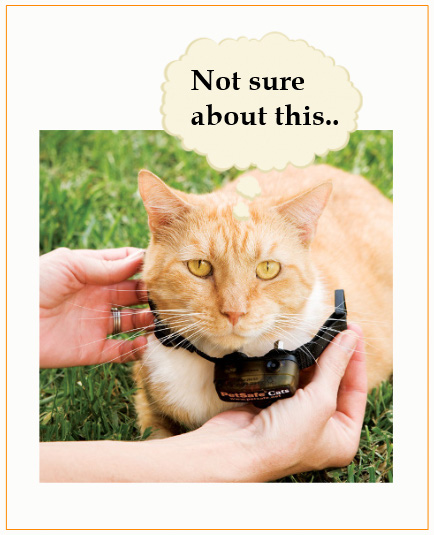 Electric shock collar for cat